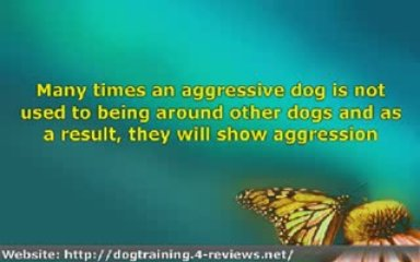 4 Dog Training Tips For Handling Overly Aggressive Dogs
