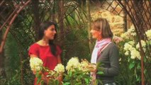 Conseils Jardinage : 4 plantes pour un beau jardin !
