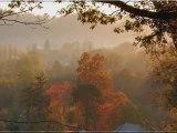 the sweet autumn octodon