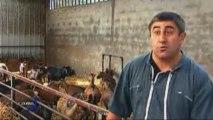 Pas de crise chez les éleveurs de chèvres (Bazoges-En-Pareds)