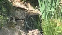 Jardins aquatiques - Présentation du musée vivant de la plante aquatique