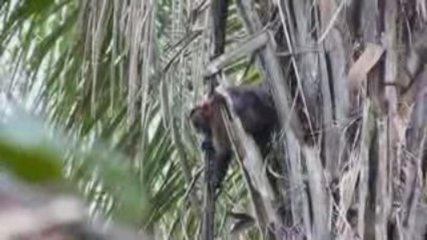 Animaux de la Selva
