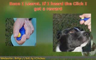 Using Dog Training Tools turns Dog Training into Fun