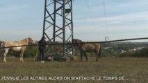 DOMAINE DE RABREUX-1-CHEVAL ISLANDAIS EPISODE 1