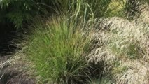 Ornamental Grasses Virtual Tour - Tall Grasses