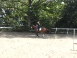 Concours obstacles Equitation