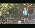 Kidnapping Dog (court métrage) - Partie 1