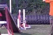 concours d'agility tut'sy black septembre 2009 ronchin