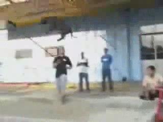 pitbull-olympique