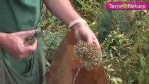Récoltez vos propres graines de fleurs et légumes ?