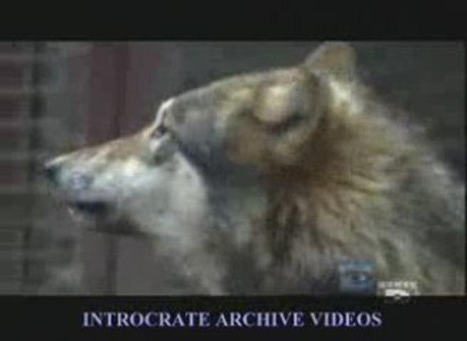 l'Homme Loup - 2 de 3