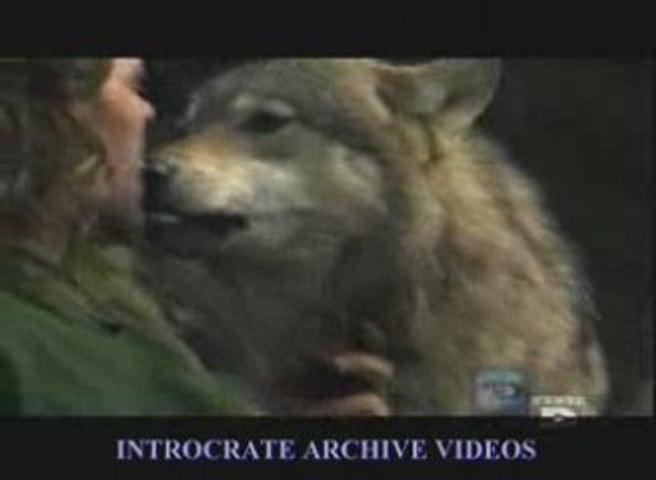l'Homme Loup - 1 de 3