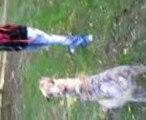 promenade liberdter des chiens