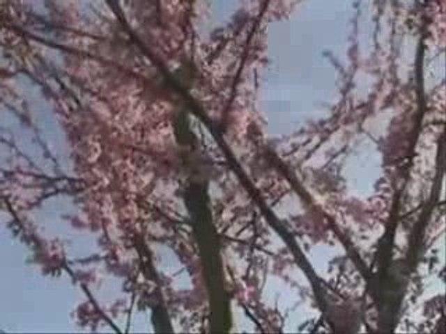 Любэ - Годы (весне primăvară printemps)