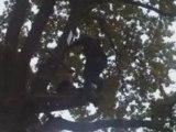 Accro - Branche