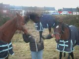 mes chevaux, mes amis