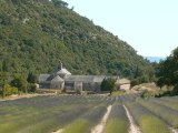 La Provence n° 15 : Abbaye de Sénanque ( Vaucluse )