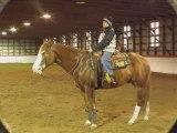 un super beau cheval