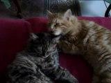 Câlins et amour fraternel