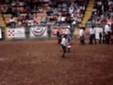 Spectacle de rodeo Stockyards - Rodéo de bambins sur mouton!