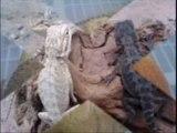 Leopard Geckos For Sale 786-973-3364