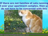Cats, Shade and Gravity - A Natural Part of Your Garden Pati