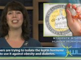 Obesity: Cure Is Linked To Hunger Hormone Leptin