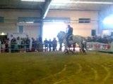 chevaux spectacle salon Albi 2009
