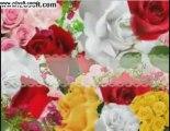 Grace Deeb Romance Song's