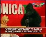 Anabela Ascar entrevista al gorila escritor 4/4