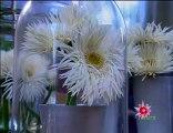 Flocon de fleurs chez Julie