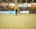 Pauline et Naiade salon du cheval 2009. Travail au Sol 1