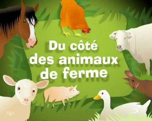 Video animaux de ferme