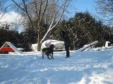 Freestyle canin, Hiver 2009