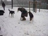 Chien qui se roule dans la neige - Suite de l'après midi