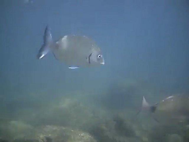 Sars chasse sous marine apnée