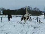 Urkaane se roule dans la neige