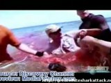 Shark Attack (WARNING EXTREMELY GRAPHIC)