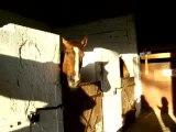 Tic du cheval alezan