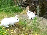 Le lapin et la lapine