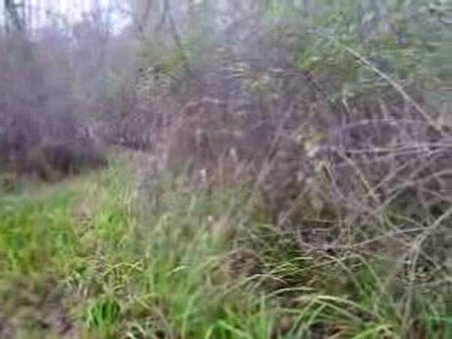Sortie au bois avec chiots de Tambo X Tréma (5 mois et 1/2)