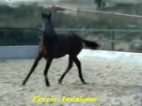 Ecurie Andalouse .