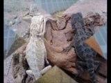 turtles red eared sliders 786-973-3364