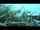 film de chasse sous marine 2008 2009 dans les alpes maritime