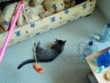 orion jouant avec la souris