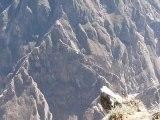 Le vol des condors au dessus du Canyon de Colca