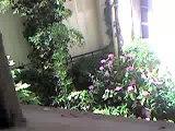 Des fleurs à mon balcon