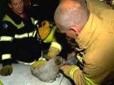 Cãozinho heroi salva gatinhos em um incêndio