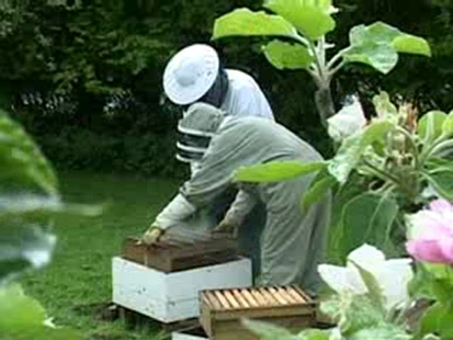 Honey sales down as bee colonies collapse