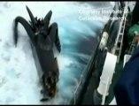Collision d'un anti-baleinier avec un bateau Japonais